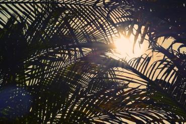 2015-09-Life-of-Pix-free-stock-photos-palm-sun-nature-fresonneveld.jpeg
