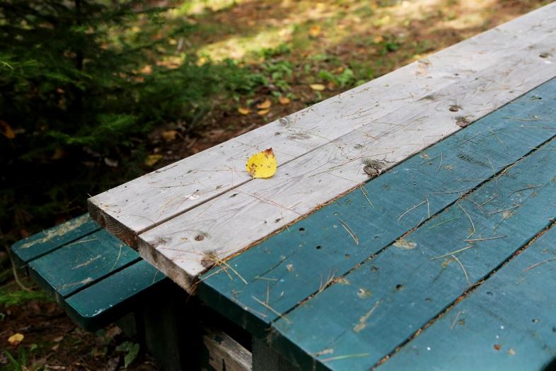 2015-12-Life-of-Pix-free-stock-photos-outdoor-table-leave-AlexisDoyen.jpg